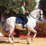 Balade cheval camargue forum Avis des experts